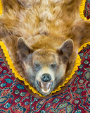 Cinnamon bear rug Royalty Free Stock Image