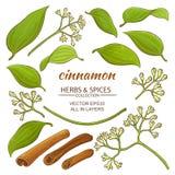 Cinnamon elements set Stock Photo