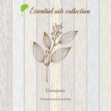 Cinnamon, essential oil label, aromatic plant Royalty Free Stock Photography