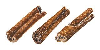 Cinnamon hand drawn watercolor illustrations set