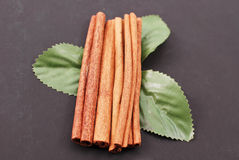 Cinnamon Mint Royalty Free Stock Photos