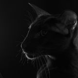 Cinnamon oriental cat profile Royalty Free Stock Photography