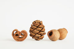 Cinnamon roll, Cypress cone, fruits of gum tree Royalty Free Stock Images