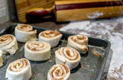Cinnamon roll spirals rising on a cookie sheet. Spirals of sweet cinnamon rolls rest on a cookie sheet, so the dough can rise before baking royalty free stock photos