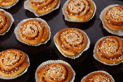 Cinnamon rolls on a baking tray Royalty Free Stock Photo