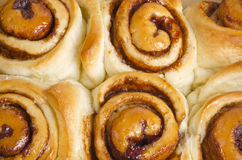 Cinnamon Rolls Isolated on White Stock Photography