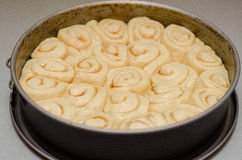 Cinnamon rolls rising Stock Images