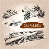 Cinnamon. Set of hand drawn graphic illustration Royalty Free Stock Images