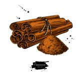 Cinnamon stick tied bunch and powder. Vector drawing. Hand drawn. Sketch. Seasonal food illustration isolated on white. Spice and flavor object. Cooking and vector illustration
