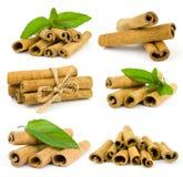 Cinnamon sticks and fresh mint leaf Stock Image