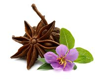 Star anise and seeds isolated on white. Cinnamon sticks with star anise and green leaves stock photos