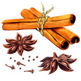 Cinnamon sticks and star anise isolated. Watercolor painting on white background Royalty Free Stock Photo