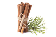 Cinnamon sticks tied in a bow Stock Image