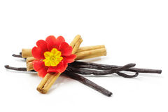 Cinnamon sticks and vanilla beans Stock Images