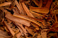 Cinnamon sticks on wood table,bundles of cinnamon Royalty Free Stock Photo