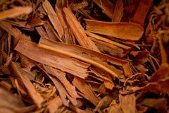 Cinnamon sticks on wood table,bundles of cinnamon Royalty Free Stock Photo