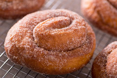 Cinnamon Swirl Donuts Royalty Free Stock Photo