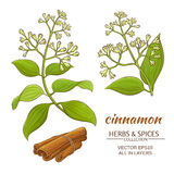Cinnamon vector set. Cinnamon branches vector set on white background Royalty Free Stock Photos
