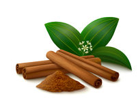 Cinnamon on white background. Cinnamon sticks, powder, leaves and flower with shadows isolated on white background. Vector illustration Stock Image