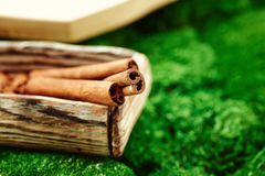 Cinnamon in a wooden box, on the background of lush green Dutch moss. Royalty Free Stock Image