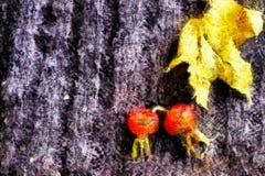 Cinorrodi rossi del cane e foglia di acero gialla su un fondo grigio, natura morta di autunno Immagine Stock Libera da Diritti