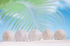 cinq étoiles de mer d'étoiles sur le sable blanc échouent avec l'océan Photographie stock libre de droits