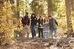 Cinq amis appréciant une hausse dans une forêt, la Californie, Etats-Unis Photo stock