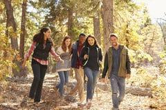 Cinq amis heureux apprécient une hausse dans une forêt, la Californie, Etats-Unis Photos stock