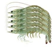 Cinq crevettes Photographie stock libre de droits