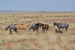 Cinq des chevaux et demi Photo stock