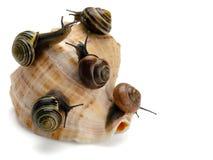 Cinq escargots et coquille de coque de mer Photographie stock