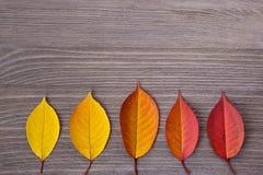 Cinq feuilles d'automne colorées sur une table en bois images stock
