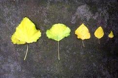 Cinq feuilles tombées sur la terre moussue image stock