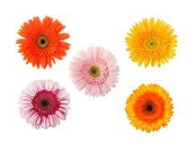 Cinq fleurs d'isolement Photos libres de droits
