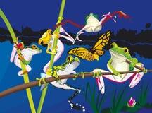Cinq grenouilles s'élevant pendant la nuit Images stock
