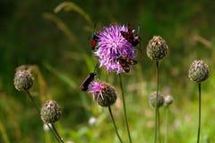 Cinq guindineaux sur une fleur Photo libre de droits