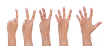 Cinq mains femelles de compte Photos libres de droits