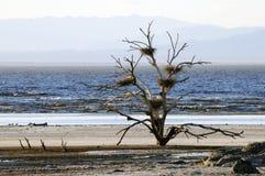 Cinq nids d'oiseau Images libres de droits