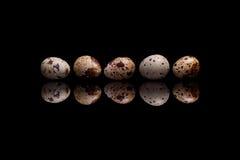 Cinq oeufs de caille sur le fond réfléchi noir Photographie stock libre de droits