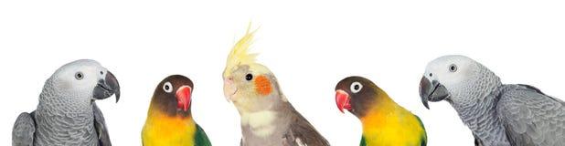 Cinq oiseaux tropicaux photo stock