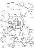 Cinq petits canetons mignons nagent sur le lac et se tiennent sur l'herbe Photographie stock