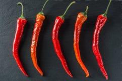 Cinq poivrons d'un rouge ardent sur le fond de l'ardoise image libre de droits