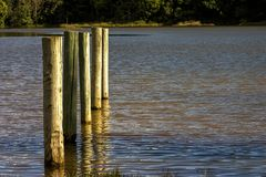 Cinq poteaux en bois dans un lac images libres de droits