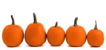 Cinq potirons oranges Photos libres de droits