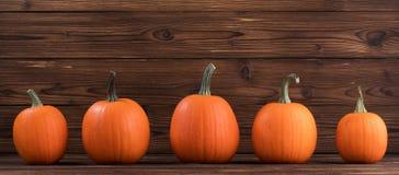Cinq potirons oranges Photo stock