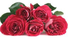 Cinq roses roses Photo stock
