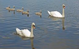 Cinq signets à l'extérieur avec des oiseaux de parent. Images stock