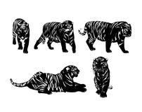 Cinq silhouettes des tigres Image libre de droits