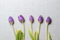 Cinq tulipes à une distance entre eux sont localisées Photographie stock