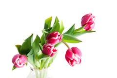 Cinq tulipes Image stock